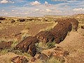Petrified Forest National Park 2.jpg