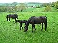 Pferde Familie.JPG