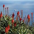 Pico do Facho, Machico, Madeira - 2013-01-11 - 86138946.jpg