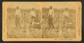 Piking cotton, Georgia, from Robert N. Dennis collection of stereoscopic views.png