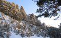 Pinar-nevado.jpg