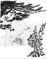Pine, Foxglove, Spiderweb, Wind.jpg