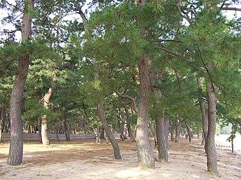 Pine--tree