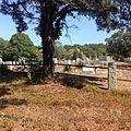 Pine Grove Cemetery Truro, Mass.jpg