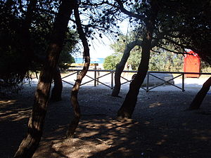 Porto Sant'Elpidio - The pinewood which goes along with the promenade