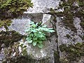 Plant in the wall (7566118822).jpg