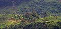 Plantations de thé dans la région de Nuwara Eliya 2.jpg