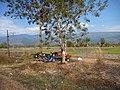 Planting rice 001 - panoramio.jpg