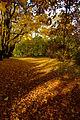Planty Jesień 4.jpg