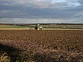 Plough and birds - geograph.org.uk - 1056473.jpg