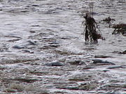 Pollutedflood