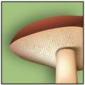 Pores icon.png
