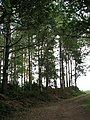 Private road into Birch Hole Plantation - geograph.org.uk - 543458.jpg