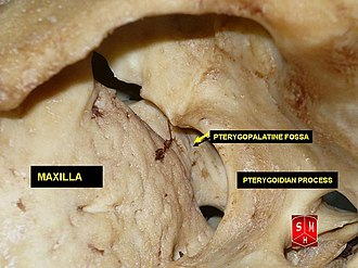 Pterygopalatine fossa - Image: Pterygopalatine fossa