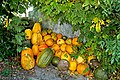 Pumpkins Party (2055330119).jpg