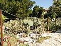 Queen Mary Gardens Balchik - panoramio (2).jpg