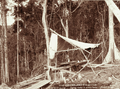 Queensland State Archives 2393 Pit sawing and cutting timber to build a house at C M Nothlings Farm Blackall Range c 1899.png