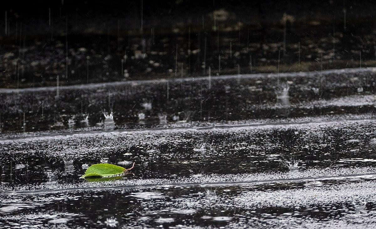 Rain and a leaf