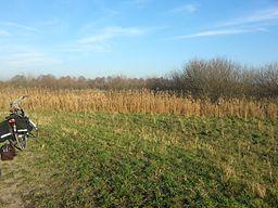 Rand van natuurgebied Moerputten bij 's-Hertogenbosch