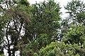 Ranganathittu Bird Sanctuary 10.jpg