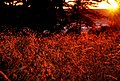 Red sunset - panoramio.jpg