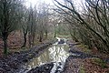 Reflective path, Eastnor - geograph.org.uk - 1134194.jpg