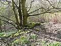 Remains of railway boundary wall, Clifton - geograph.org.uk - 758796.jpg