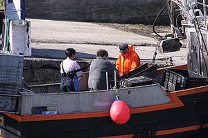 Retour de la pêche à la seiche du fileyeur Jason IV (12).JPG