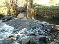 Rio Sarela, no Romaño.jpg