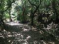 Riserva naturale orientata Bosco di Santo Pietro 11.jpg