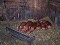 Riverdale Farm 005 (5333924282).jpg
