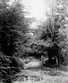 Road through forest with wooden structure next to it, June 24, 1899 (WASTATE 2564).jpeg