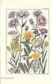 Rocky mountain flowers (Plate 38) (6280209934).jpg