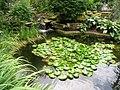 Rodef Shalom Biblical Botanical Garden - IMG 1330.JPG