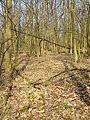 Rohrwald sl33.jpg