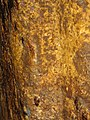 Rosia Montana Roman Gold Mines 2011 - Wall Detail-12.jpg