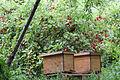 Rote Johannisbeeren (14788615815).jpg