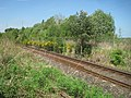 Rothiemay railway station (site), Aberdeenshire (geograph 5409241).jpg