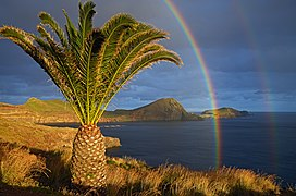 São Lourenço The palm tree and rainbows. Madeira, Portugal.jpg