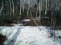 Sakhalin's nature. 02.jpg