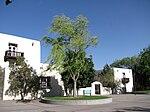 Salix Babylonica, UNM Arboretum, Albuquerque NM.jpg