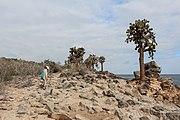 Santa Fe Island 01.jpg