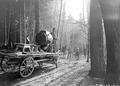 Scheinwerfer auf Wagen im Wald - CH-BAR - 3237878.tif