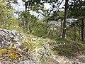 Sesleria caerulea (s. str.) sl9.jpg