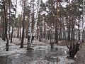 Seversk, Tomsk Oblast, Russia - panoramio (59).jpg