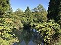 Shimono Pond 20171106-4.jpg