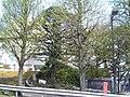 Shinagawawardoffice.jpg