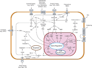 Kinase - Overview of signal transduction pathways. Many of the proteins involved are kinases, including protein kinases (such as MAPK and JAK) and lipid kinases (such as PI3K).