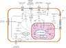 Signal transduction pathways.png