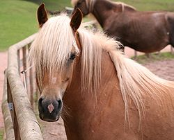 definition of forelock
